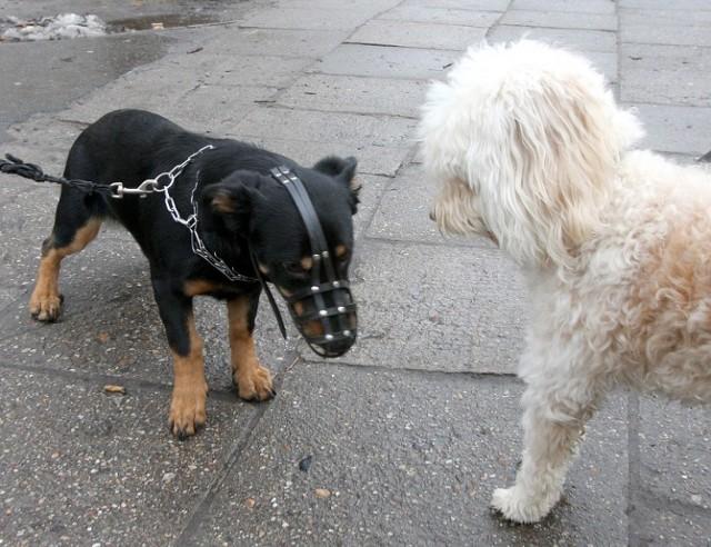 Mieszkańcy Starego Miasta domagają się wyższych kar za niesprzątanie po psach