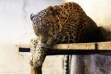 Zoo w Zamościu. Majówkowe lenistwo zwierząt. Zobacz zdjęcia