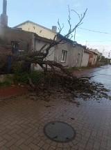 Powalone drzewa, zerwane dachy. Wiatr szaleje w powiecie radziejowskim [zdjęcia]