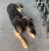 Żory: zostawił psa na pełnym słońcu na blisko dwie godziny! Zwierzę nie miało wody. Zareagowały policjantki