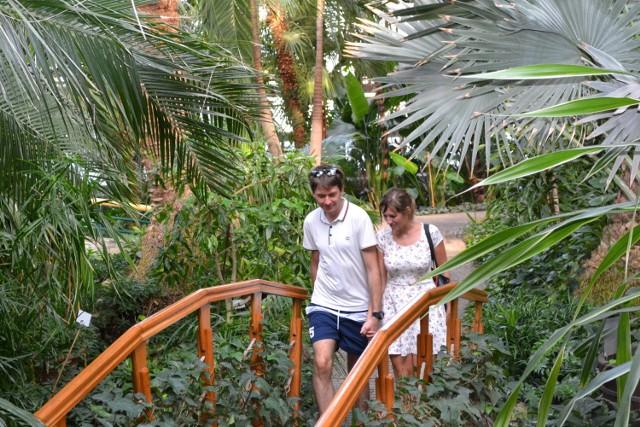 W gliwickiej palmiarni sezon w w pełni