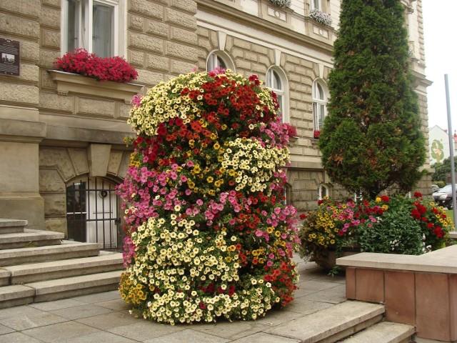 Kompozycja kwiatowa przed Urzędem Miejskim w Bielsku-Białej.