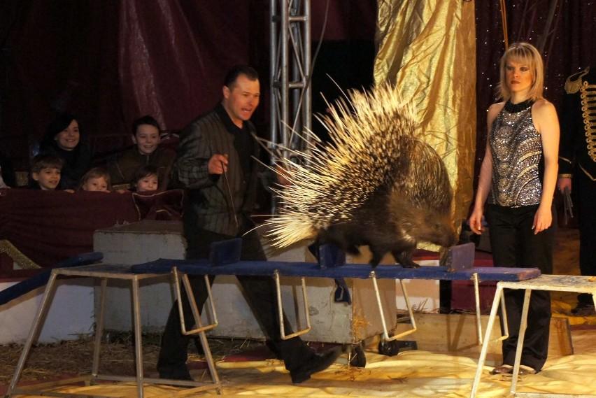 Wielkie cyrkowe widowisko w Chełmie już jutro