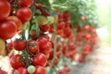 Uważajcie na te warzywa i owoce. Mają najwięcej pestycydów