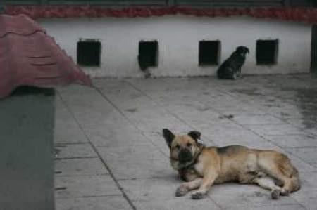 Dąbrowskie psy wciąż trafiają do chorzowskiego schroniska.