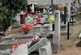 Od dwóch lat pies mieszka na cmentarzu w Bydgoszczy. Nie ma już pana, ale pozostało przywiązanie