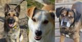 Pieski z bydgoskiego schroniska czekają na nowy dom. Zobaczcie, jakie są piękne! [zdjęcia]