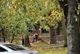 Malbork. Liście w parku zostaną dla jeży. W mieście trawniki są grabione, a chodniki i jezdnie będą sprzątane na bieżąco