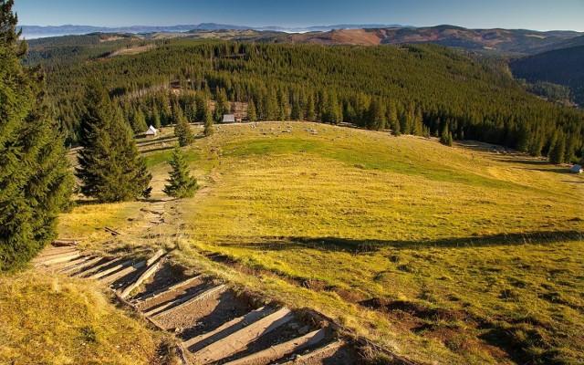 Rusinowa Polana  To urokliwa polana reglowa w polskich Tatrach Wysokich. Polana znajduje się pomiędzy Gęsią Szyją (1489 m) a Gołym Wierchem (1205 m), na grzbiecie łączącym Tatry z Pogórzem Bukowińskim. Położona jest na wysokości około 1180-1300 m n.p.m.  W okolicy polany żyją jelenie, sarny, zające, lisy, czarne wiewiórki i kruki. Bywają także niedźwiedzie.