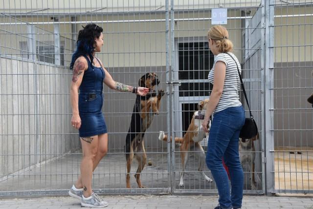 Schronisko dla zwierząt przy ul. Przytulnej w Grudziądzu istnieje trzy lata. W tej chwili jest to 240 psów i 140 kotów