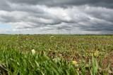 Porady. Rolnicy pytali o dopłaty bezpośrednie, odpowiedzieli im pracownicy ARiMR