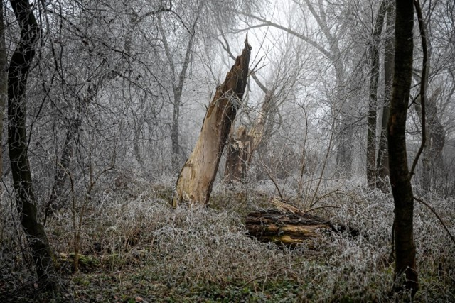 Park Wilgi w grudniu 2020, po rewitalizacji