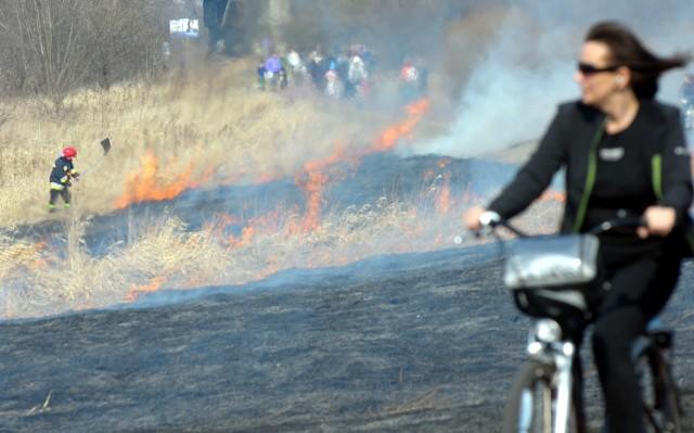 Pożary traw przy ścieżce rowerowej nad Zalewem Zemborzyckim
