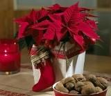 Gwiazda betlejemska to jeden z najważniejszych bożonarodzeniowych symboli