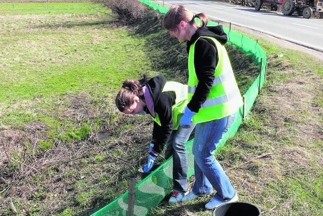 Gimnazjalistki z Mszany Górnej pomagają ratować żaby
