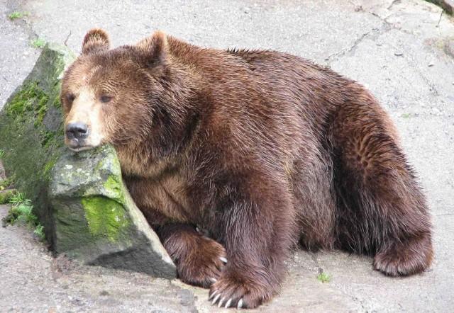 Śląskie zoo jest królestwem fetoru i ubóstwa, żebrzącym każdego roku o żarcie dla swoich pensjonariuszy