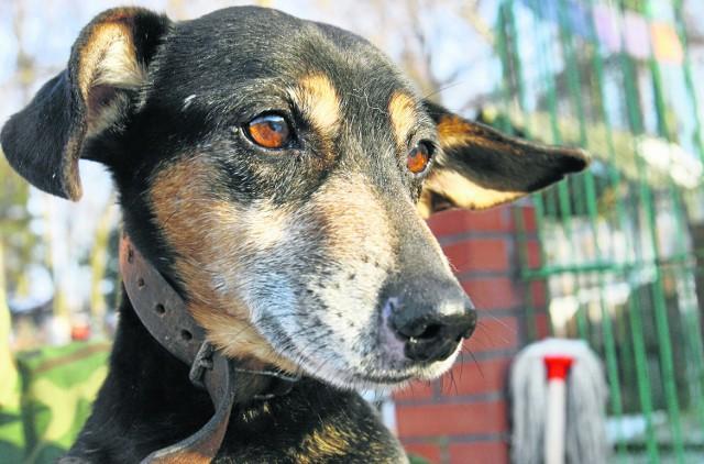 W 2012 roku w Łodzi nie będzie podatku za psa.