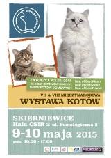 Wystawa kotów w Skierniewicach