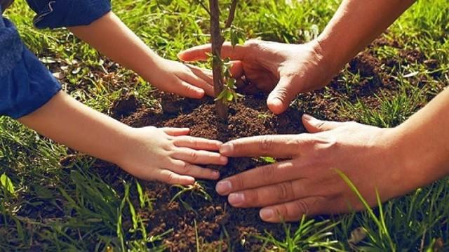 W całej Polsce dla wszystkich chętnych leśnicy przygotowali milion sadzonek