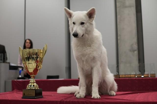 Biały owczarek szwajcarski okazał się najpiękniejszym psem regionu w 2016 roku.