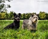 Psy do adopcji z Radomskiego Schroniska dla Bezdomnych Zwierząt. Może któregoś i przygarniesz (ZDJĘCIA)