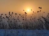 Jeszcze więcej zimy. Śnieżne krajobrazy w obiektywie Czytelników