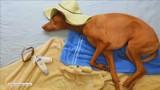 Ten pies w czasie snu zostaje modelem i przeżywa niesamowite przygody [WIDEO]
