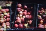Za dużo owoców w sadzie? To może do banku żywności. Francja tak robi