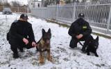 Poznajcie policyjne psy w Piotrkowie. To Kabal, Etar i Jab [ZDJĘCIA]