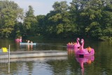 Oblężenie flamingów na Młynku, na Księżym Młynie kulinarna bitwa. Zdjęcia z weekendu w Łodzi (14-15 września)