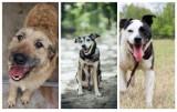 Te psiaki czekają na dom! Poznaj psy do adopcji ze schronisk w woj. śląskim.