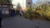 Wałbrzych: Runęły drzewa na Białym Kamieniu. Mijanka była zablokowana!