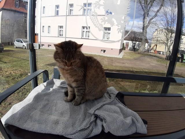 Nowy towarzysz kota z przystanku w Szczecinku