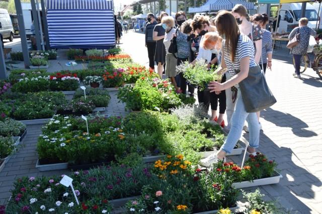 Kwiaty i sadzonki na rynku w Zduńskiej Woli. Jakie ceny na targowisku?