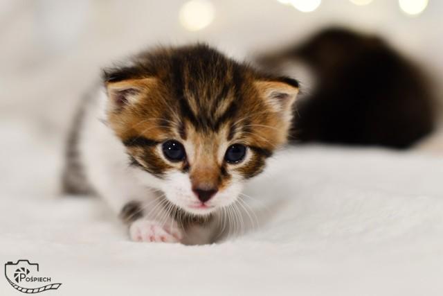 Adoptujcie kociaki z Kociej Brygady