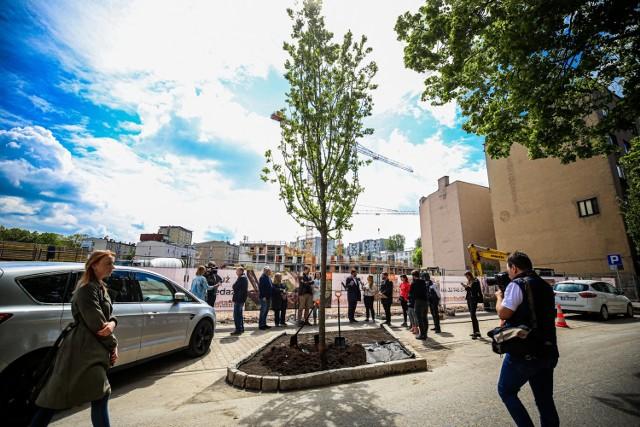 Przy ul. Raciborskiej w Katowicach posadzono nowe drzewa. Stare wyciął deweloper.   Zobacz kolejne zdjęcia. Przesuwaj zdjęcia w prawo - naciśnij strzałkę lub przycisk NASTĘPNE >>>