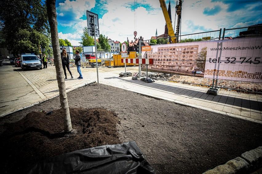 Przy ul. Raciborskiej w Katowicach posadzono nowe drzewa....
