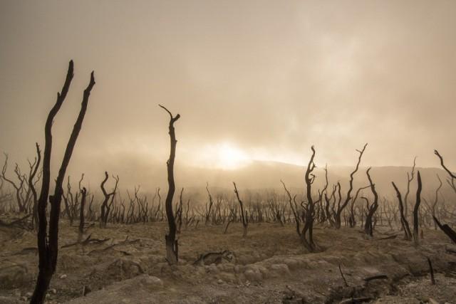 Istnieje obawa, że zmieniający się klimat przyniesie więcej epidemii chorób wirusowych.