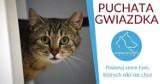 """Bezdomne koty i psy """"piszą"""" listy do Gwiazdora! Pomóż w akcji Puchata Gwiazdka w Animal Security"""