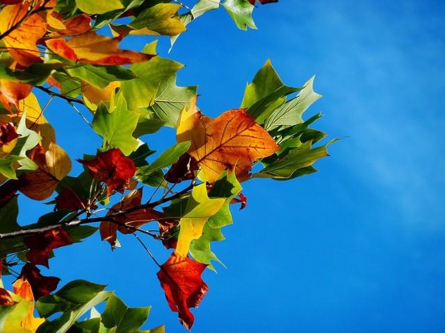 W tym roku jesień nas rozpieszcza. W czwartek znów będzie 20 stopni.