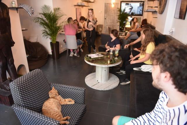 """""""Neko Cafe"""" w Toruniu - tak wyglądało otwarcie kawiarni, która dziś wystawiona jest na sprzedaż."""