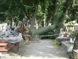 Pabianice sprzątają po burzy. Masakra na bulwarach, wycieczki na zniszczony po nawałnicy cmentarz ZDJĘCIA