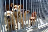 Schronisko w Pile: w wakacje przybywa psów