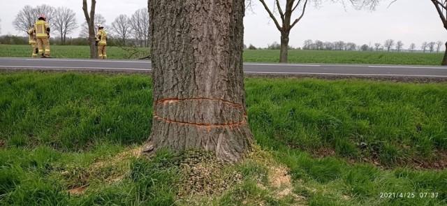 Przycięte drzewa przy DK nr 38.