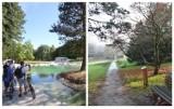 Jak zmienił się Ogród Japoński w Parku Śląskim? To uroczy zakątek. Zobaczcie ZDJĘCIA z kiedyś i dziś