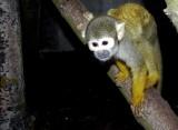 Zamojskie zoo Najlepszym Produktem Turystycznym Lubelszczyzny 2012