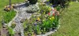 Zdjęcia pięknych kwiatów w ogrodach naszych Czytelniczek z Przemyśla i okolic [FOTO]