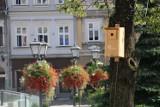 Budki z kodem QR na drzewach w Bielsku-Białej mierzą... wilgoć w korzeniach drzew