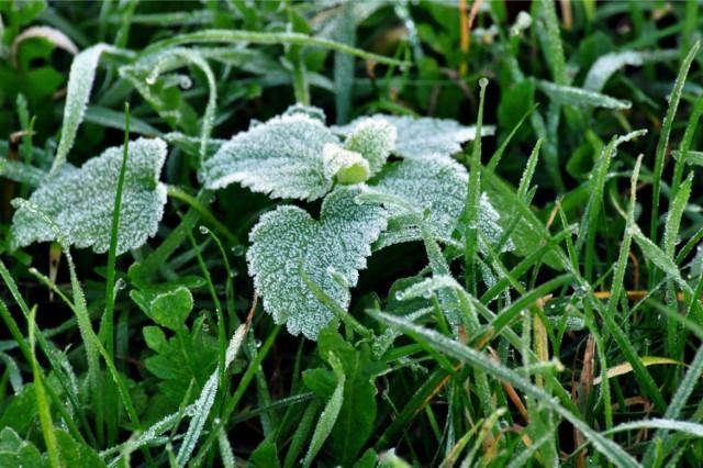 1 maja temperatura przy gruncie spadnie poniżej zera. Ucierpieć mogą rośliny, które obudziły się już do życia