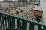 64 psy odebrane z pseudohodowli. Urzędnicy wiedzieli o problemie od kilku miesięcy